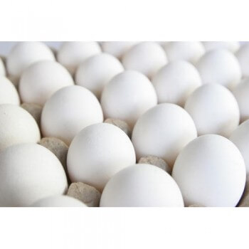 Fresh  White Chicken Eggs